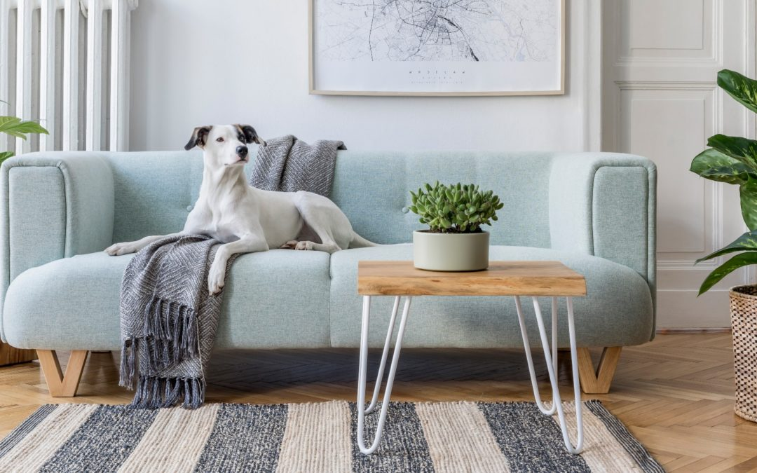 6 Home Remodeling Trends in the Bay Area